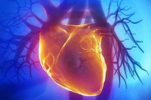 human heart profile